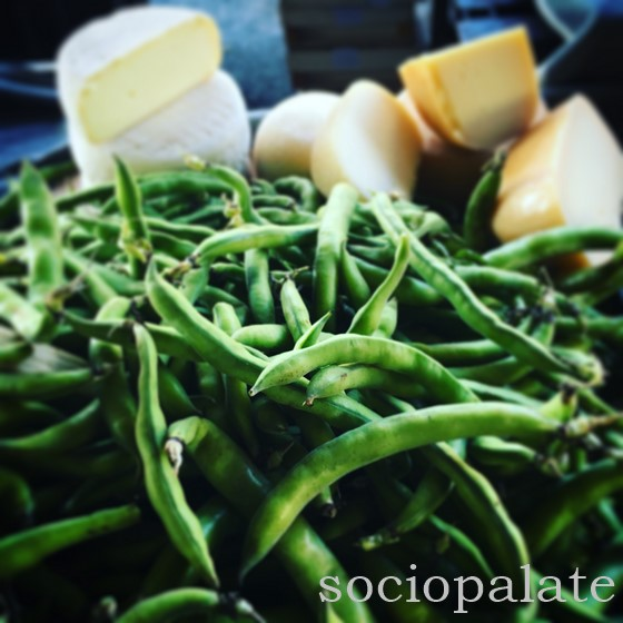 Bacelli fava bean with pecorino cheese typical Tuscan spring food