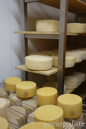 Best-cheesemaker-in-tuscany