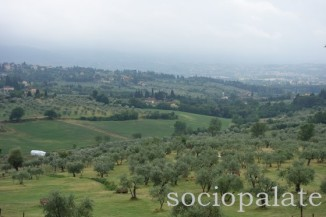 olive oil mill and food tour from Florence