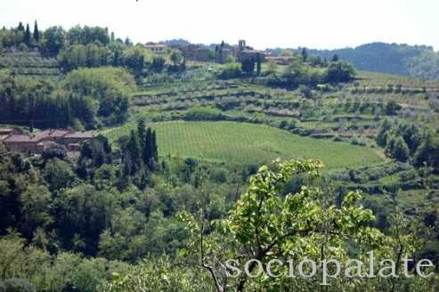 view of Chianti from exclusive private wine tasting